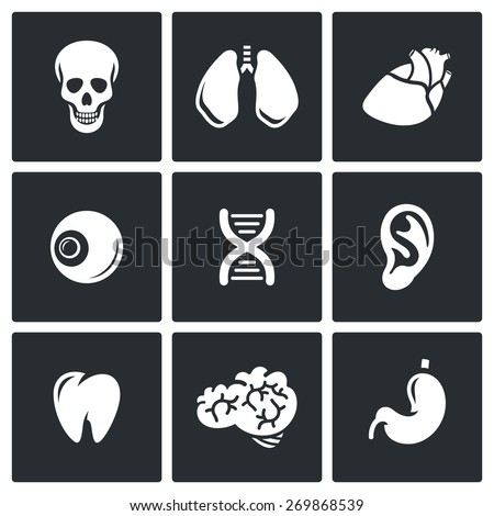 Internal organs icons: skull, lungs, heart, eyes, DNA, ear, tooth, brain, stomach. Vector Illustration. - stock vector