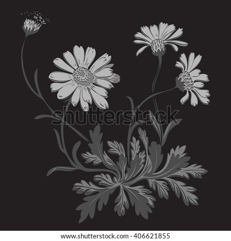 Isolated blooming meadow flower form print natural outline floral white spring ornament monochrome petal organic leaf holiday botanic summer graphic blossom drawing black daisies chamomile vector - stock vector