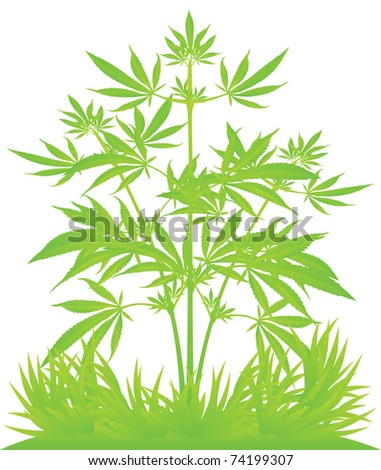 Isolated cannabis plants vector illustration - stock vector