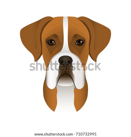 Black And White Boxer Dog Stock Images Royalty Free