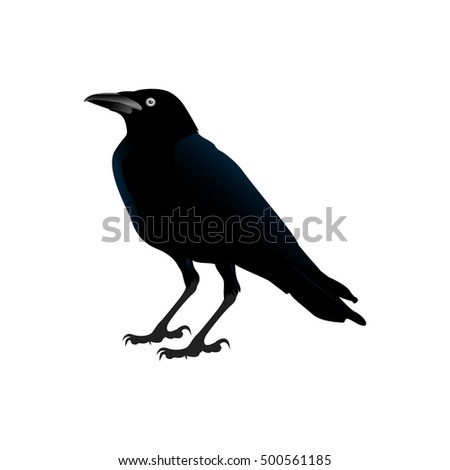 Isolated crow on a white background, Halloween vector illustration