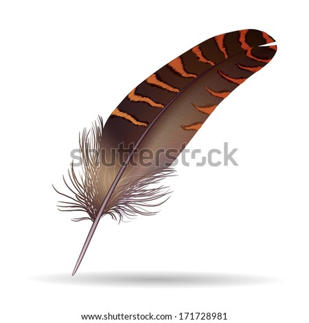 isolated feather on white background