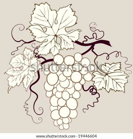 isolated grape illustration - stock vector