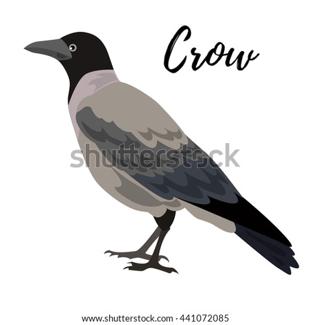 Isolated gray crow bird on a white background, vector illustration, hand drawn