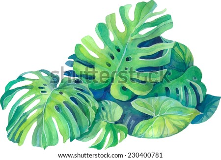 isolated green leaves of monstera plant in watercolor - stock vector