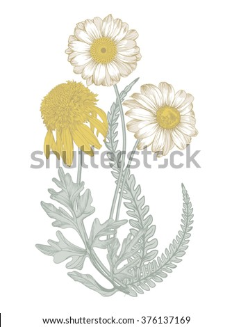 Isolated image of a field  flowers in 