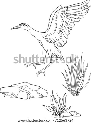 Isolated Images Of A Landing Bird, A Grass And A Stone. Coloring Page.
