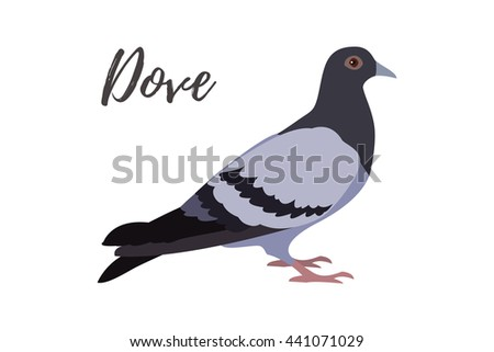 Isolated pigeon bird on a white background, vector illustration, hand drawn