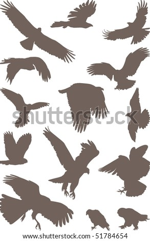 isolated silhouettes of bird predator on the white background