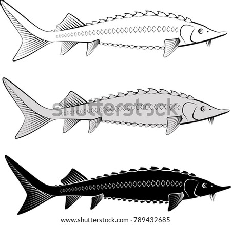 isolated sturgeon - clip art illustration and  silhouette