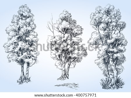 Isolated trees set, hand drawn detailed  - stock vector