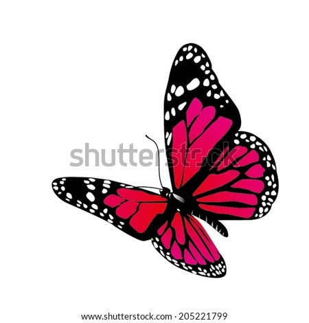 Isolated vector butterfly on a white background