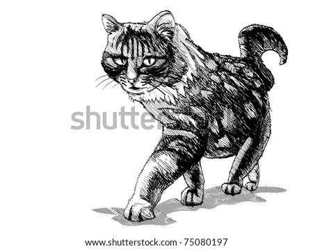 isolated walking cat on white - illustration - stock vector