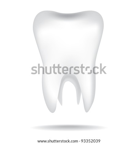 isolated white illustrations of the human tooth - stock vector