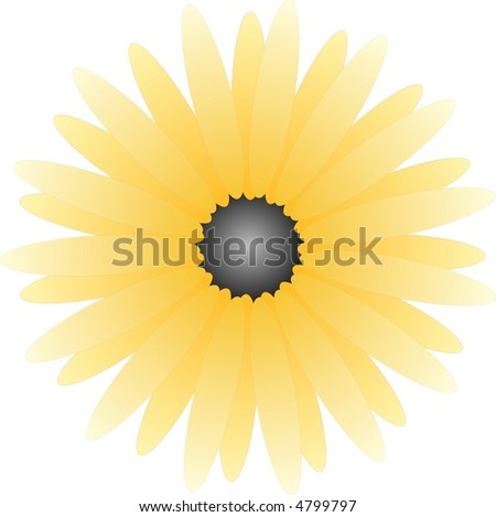 isolated yellow aster on white background - stock vector