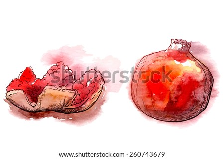 Istanbul travel notes - Pomegranate fruits are popular snack and source of making fresh juice. Traced watercolor sketch with a line drawing in a separate layer above. EPS10 vector illustration.