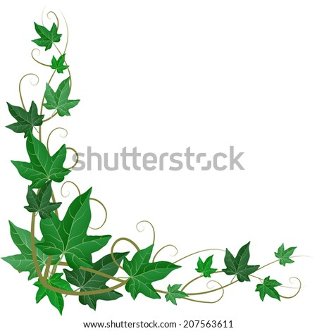 Ivy corner decoration isolated - stock vector