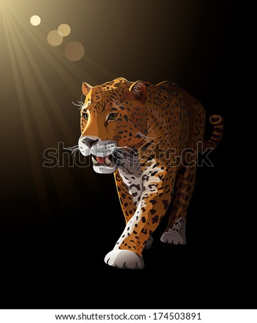 Jaguar, wild cat Panther by dark night, moonlight. Vector illustration - stock vector
