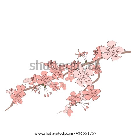 Japanese cherry spring on a isolated background