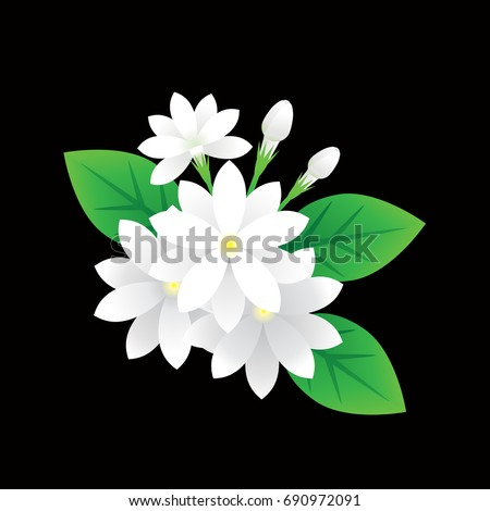 Jasmine Flower Vector On Black Background Stock Vector 690972091