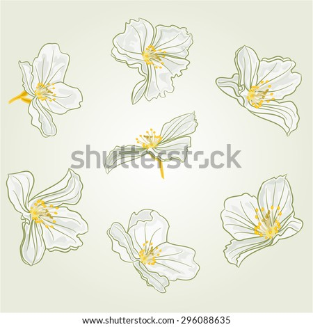 Jasmine flowers isolated on a white background vector illustration - stock vector