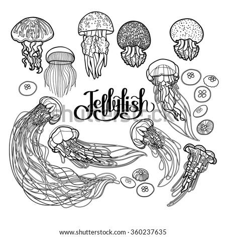 Jellyfish drawn in line art style. Vector ocean animals in black and white colors. Coloring book page design for adults and kids - stock vector