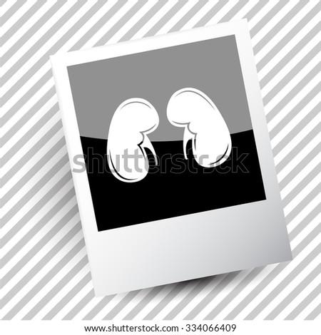 kidneys. Photoframe. Vector icon. - stock vector