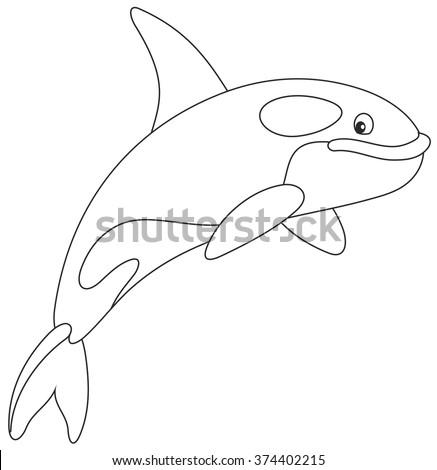 Killer whale - stock vector