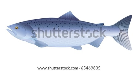 """King Salmon, saltwater fish. """"Full compatible. Created with gradients."""" - stock vector"""