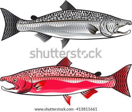 King Salmon. Silver and Spawning. - stock vector