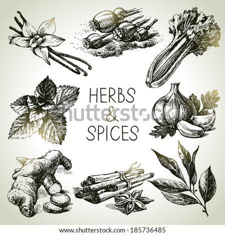 Kitchen herbs and spices. Hand drawn sketch icons - stock vector