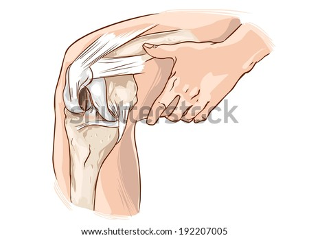 knee - stock vector