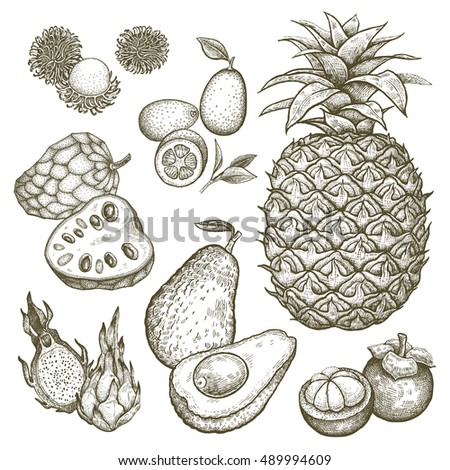 Kumquat, pineapple, dragonfruit, rambutan, mangosteen, cherimoya, avocado. Black and white exotic fruit illustration. Vector hand drawing isolated on white background. Style vintage engraving.