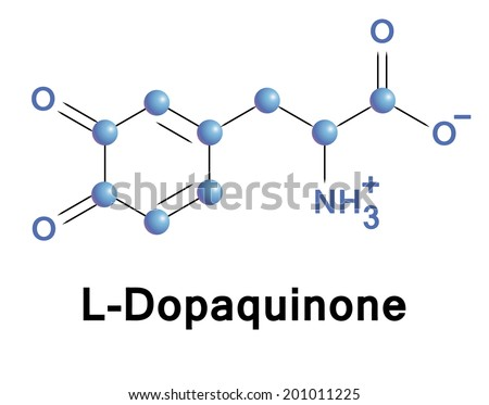 L-Dopaquinone molecule, vector illustration. - stock vector