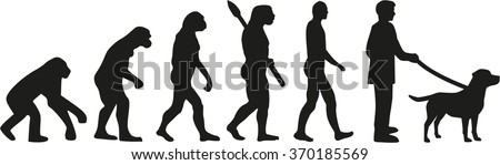 Labrador Retriever evolution - stock vector