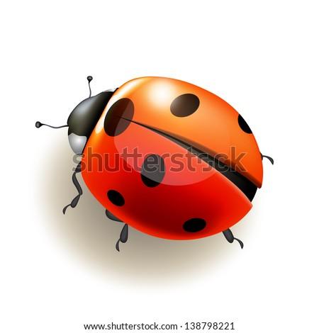 Ladybird on white background . Vector illustration. - stock vector