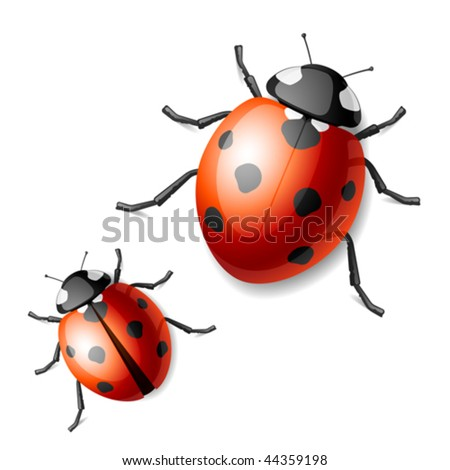 Ladybird. Vector illustration. - stock vector