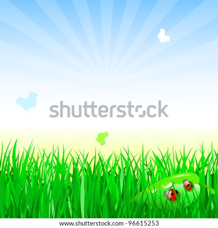 ladybug on summer grass. Nature composition. - stock vector