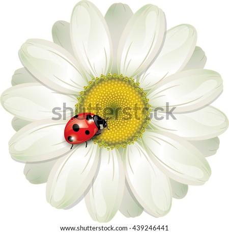 Ladybug sitting on White Daisy, design, vector illustration, eps-10 - stock vector