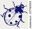 Ladybug. Vector sketch - stock vector