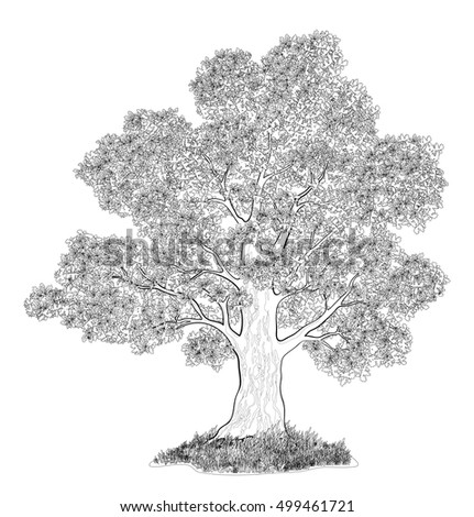 Landscape, Oak Tree with Leaves and Grass Black Contours Isolated on White Background. Vector