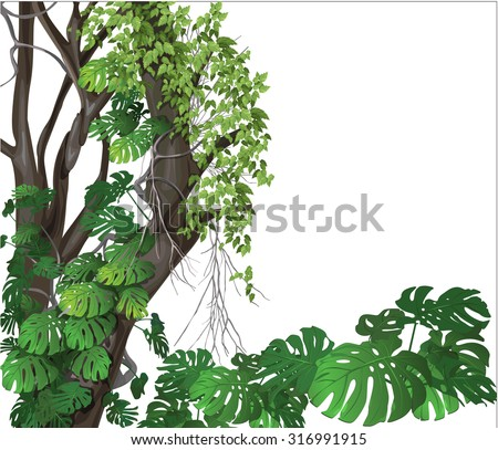 landscape plants (ecology)