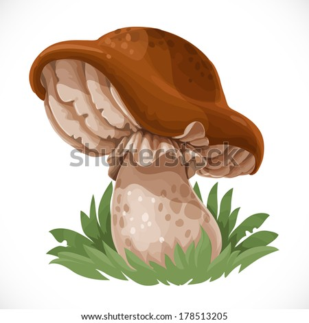 Large edible mushroom in the grass - stock vector
