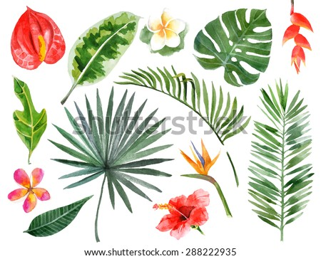 Large hand drawn watercolor tropical plants set - stock vector