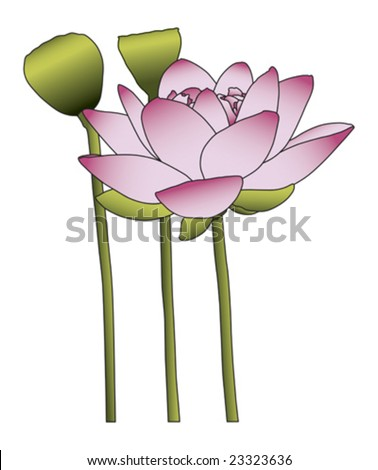Large pink lotus flower on white background - stock vector