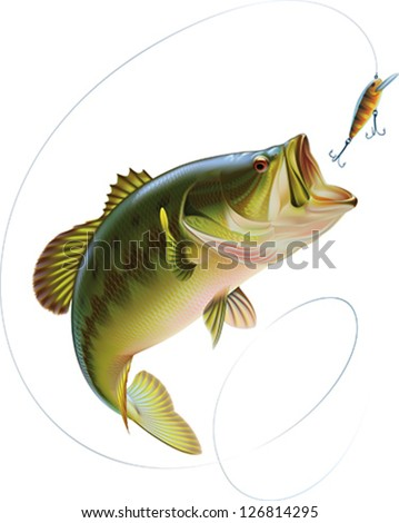 Largemouth bass is jumping to catch a bait. Layered vector illustration. - stock vector