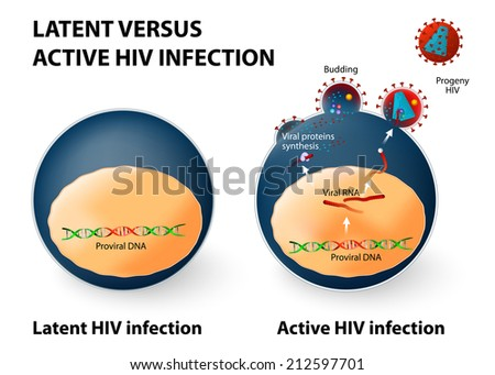 Latent and active HIV infection. The immune system cannot detect this cell as being infected. Active HIV infection if an infected cell is activated and produces new viruses. - stock vector