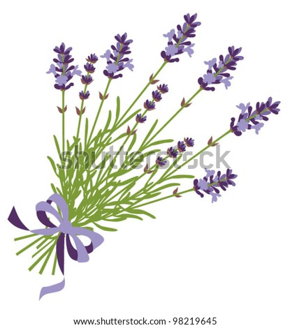 French lavender Stock Photos, Images, & Pictures | Shutterstock