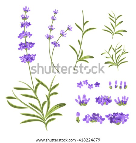Lavender flowers elements. Constructor for greeting cards and invitations. Nature floral, plant purple, blossom violet. Vector illustration - stock vector