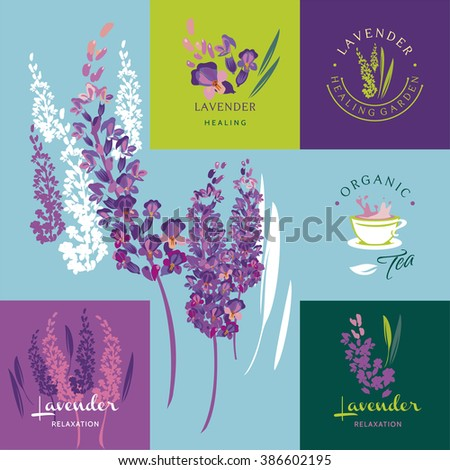 Lavender, set of vector elements and illustration - stock vector
